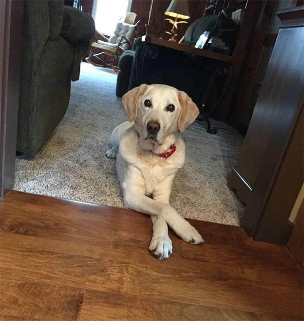 Perro con las patas cruzadas