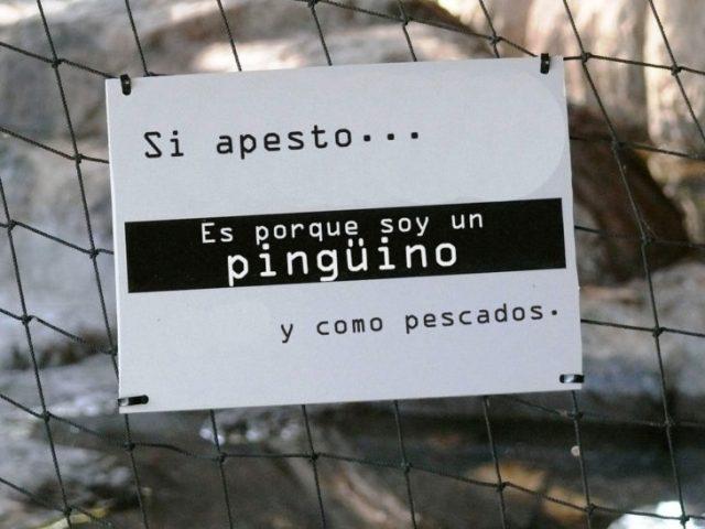 OLOR PINGUINO