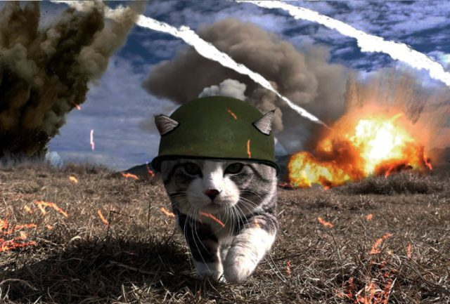 gato editado con casco militar en región de guerra