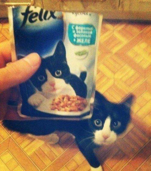 el gatito felix si existe