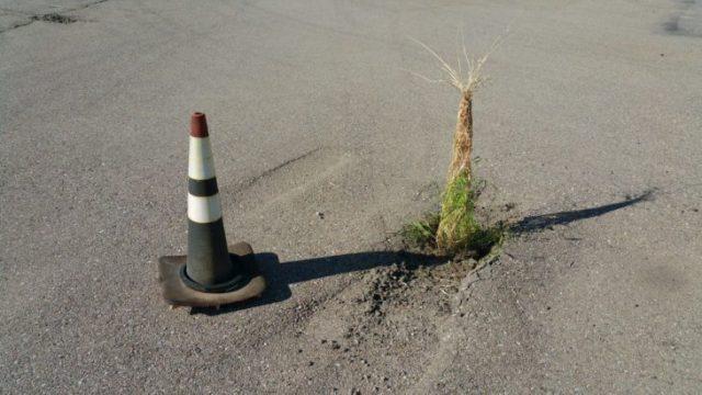 la naturaleza siempre halla su camino