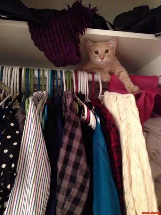Gato en un closet