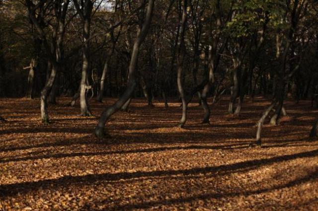 Bosque Pădurea Hoia