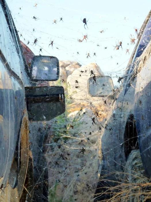 dos camionetas llenos de arañas