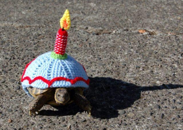 tortuga cumpleaños