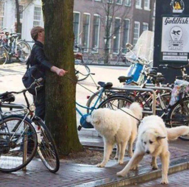 Hombre choca con árbol al salir a caminar con sus perros