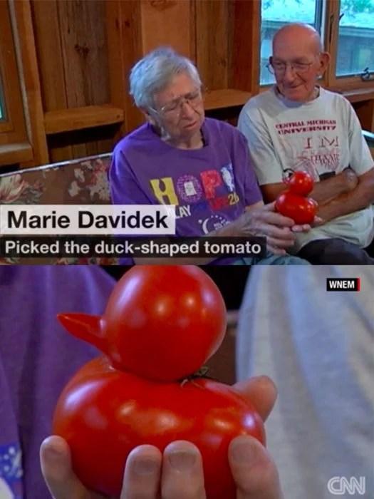 abuelos cuidan pato tomate