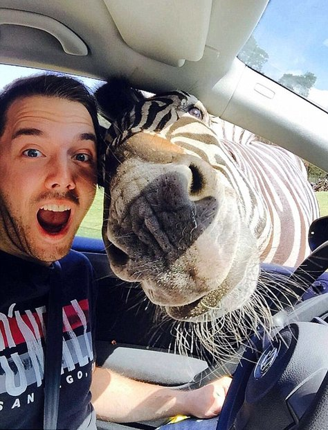 selfie con cebra