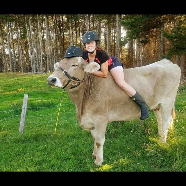 Mujer montada en vaca, las 2 traen casco