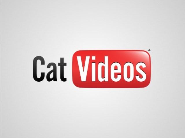 Logos sinceros - cat videos