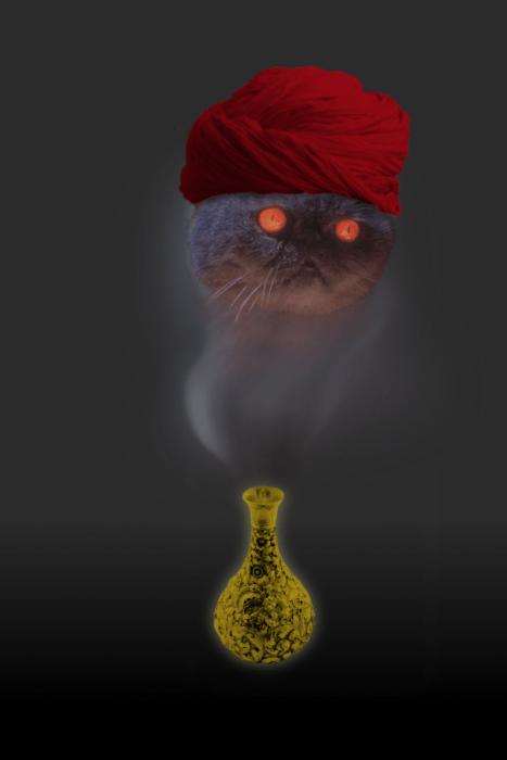 Gato de la lampara mágica