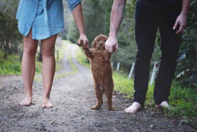 modelo doméstica que prefiero perros