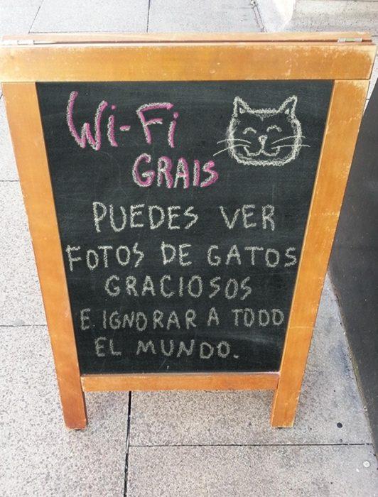 café + gatitos=felicidad
