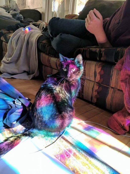 mi gatito es mágico