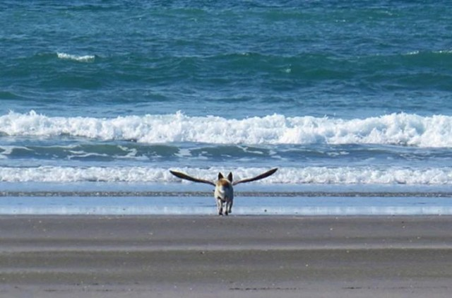 Perrito que semeja poseer alas por gaviota en la playa
