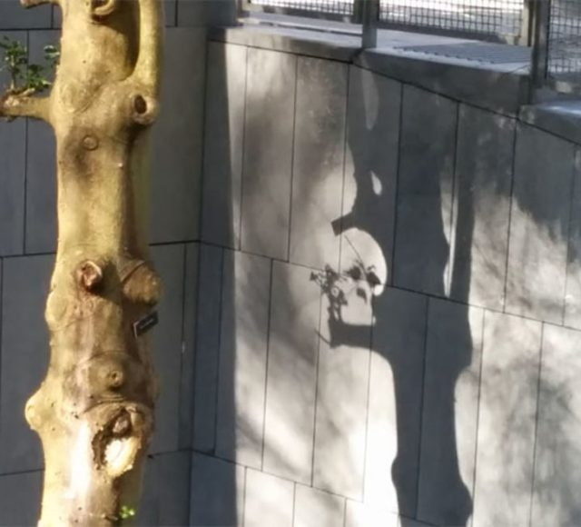 Ramas y hojas de un árbol constituyen un cráneo
