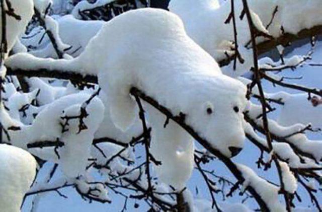 nieve con constituye de oso polar