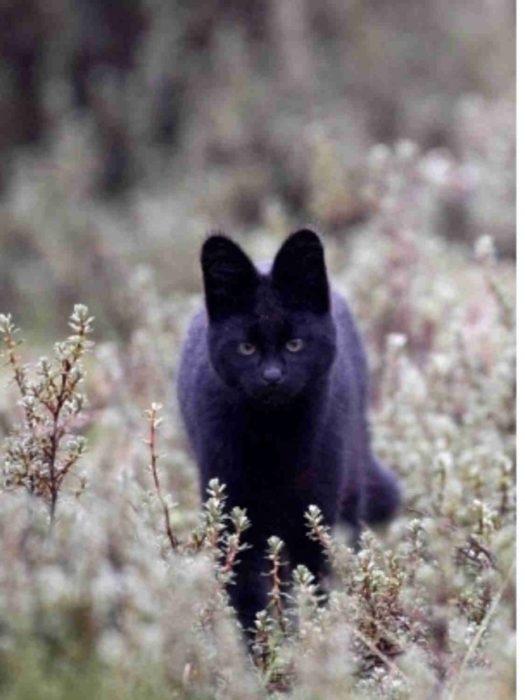 gato de color negro
