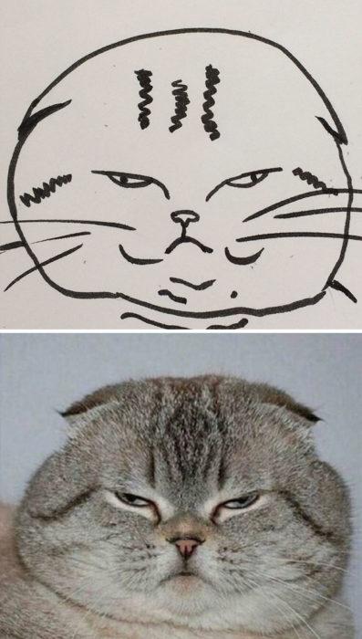 Dibujos realistas gatito - molesto