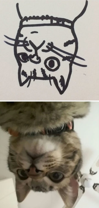 Dibujos realistas gatito - de cabeza