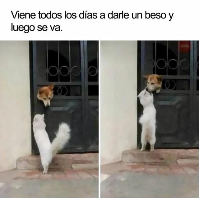 Perro y gatito beso