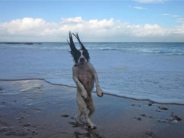 Perro sexy