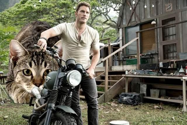 chris prat motocicleta y atrás un gatito gigante