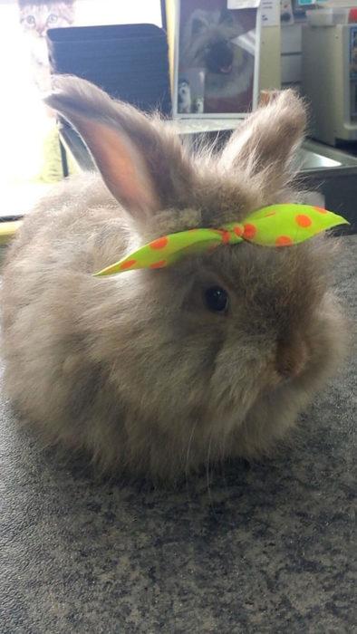 conejo moño verde