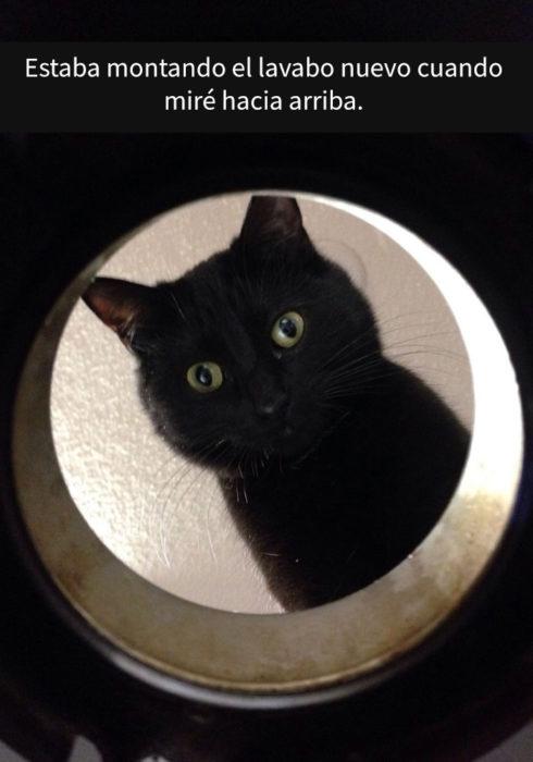 Gato viendo por un agujerito
