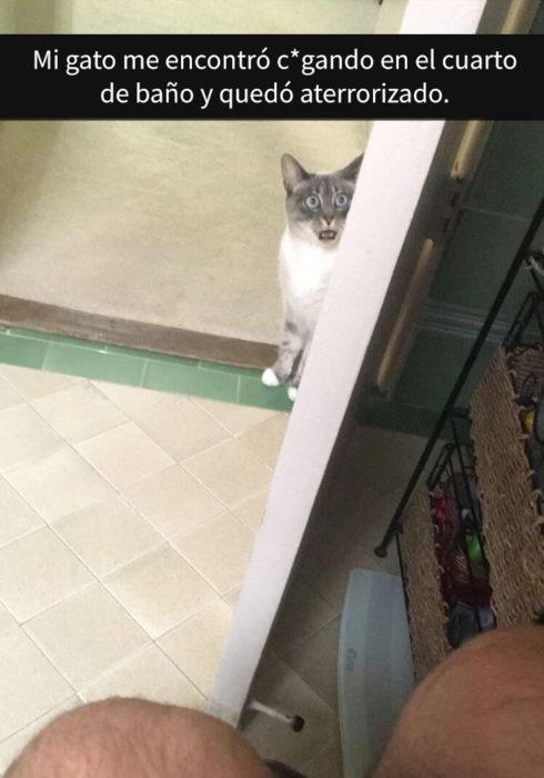 Gato atemorizado