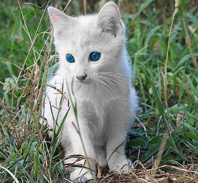 Cachorro de gatito albino