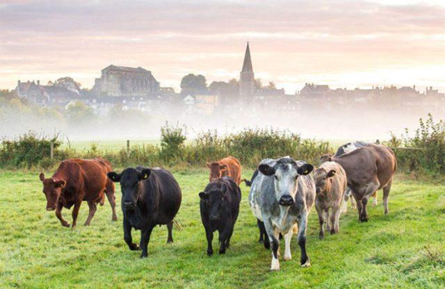 Grupo de vacas en un ámbito verde