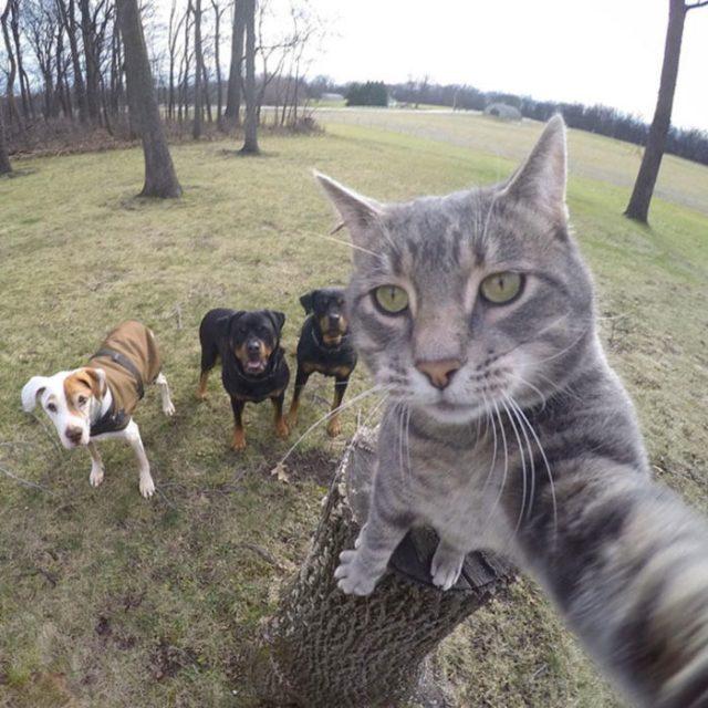 Gato jala la cámara en el instante en que fotografían a él y a unos perros