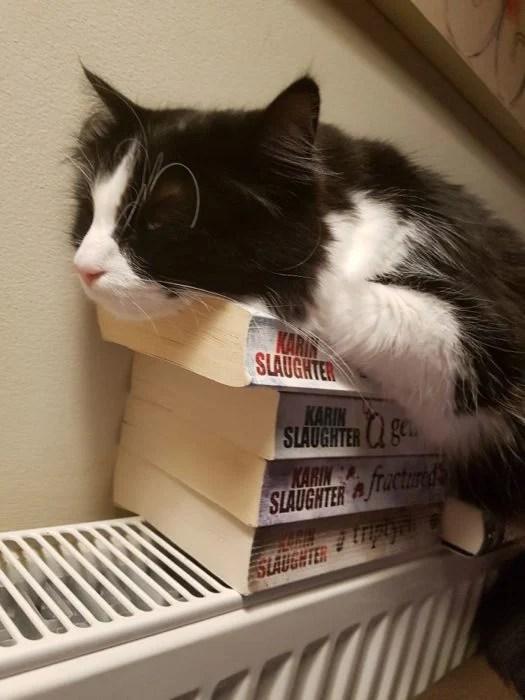 gato acostado en libros