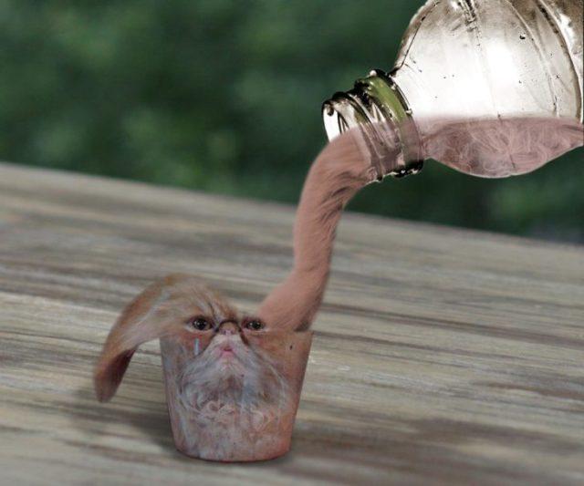 vaso de agua gato