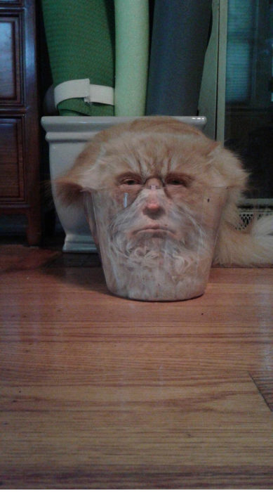 gato atrapado en un vasito Donald