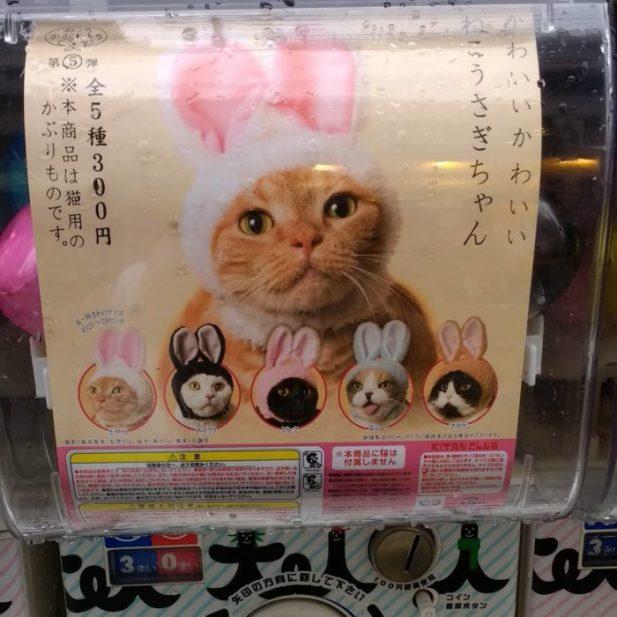 orejitas para gatito japón