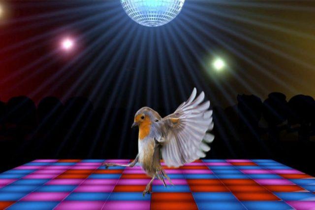 pájaro bailando