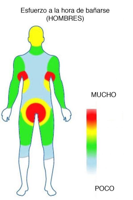 diagrama que muestra las áreas más aseadas de un hombre