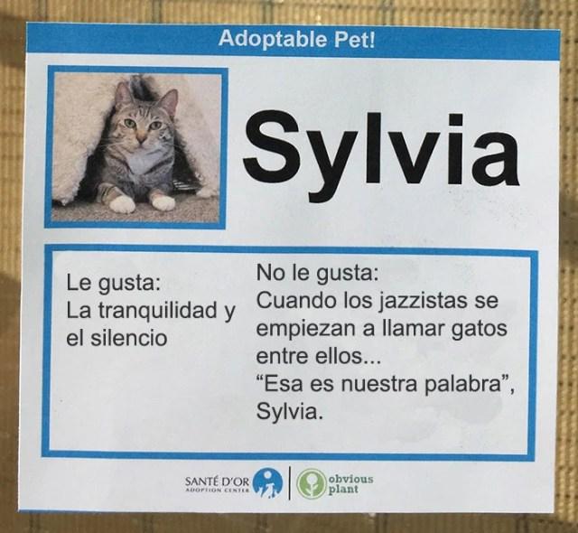 descripción gato en adopción sylvia