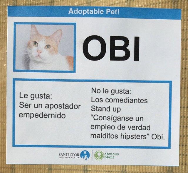 descripción gato en adopción obi