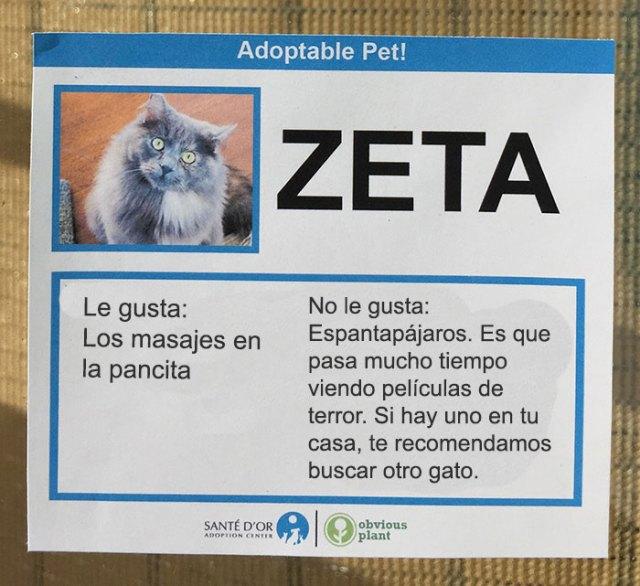 descripción gato en adopción zeta