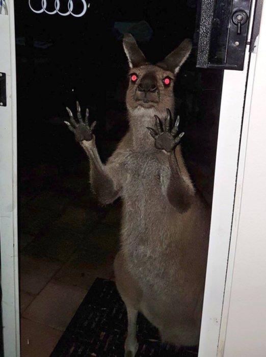 Australia una visita inesperada