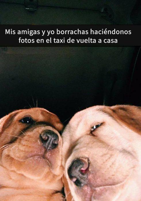 Snaps perritos - tu amiga y tú borrachas