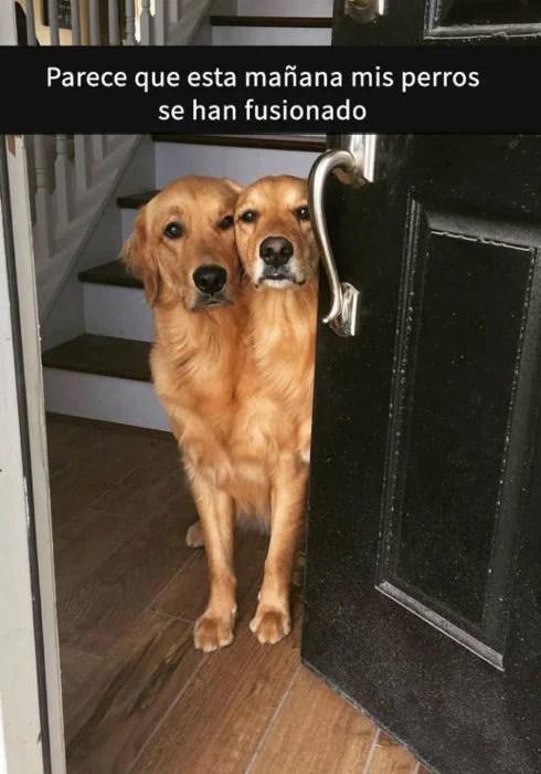 Snaps perritos - perritos fusionados