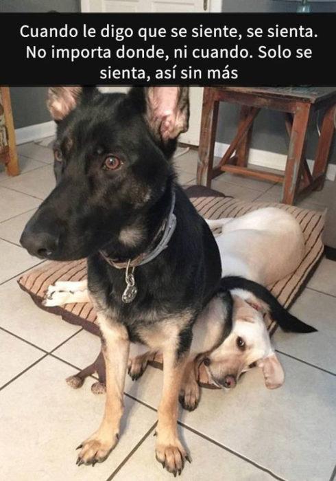 Snaps perritos - se sienta donde sea