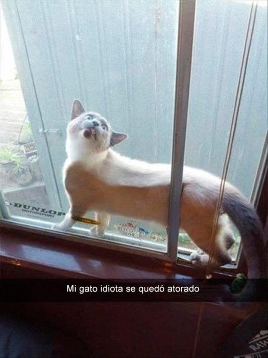 gato atorado