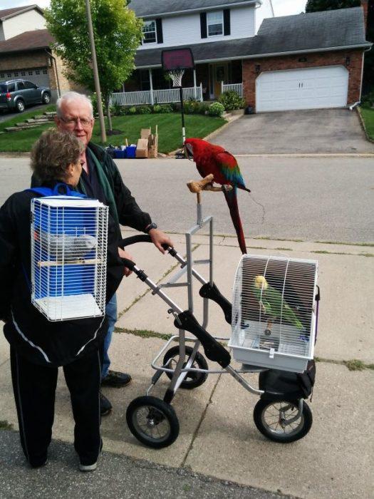 Vecinos sacan a caminar aves