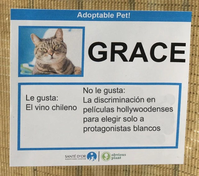 grace descripción gato en adopción