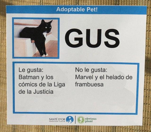 gus descripción gato en adopción